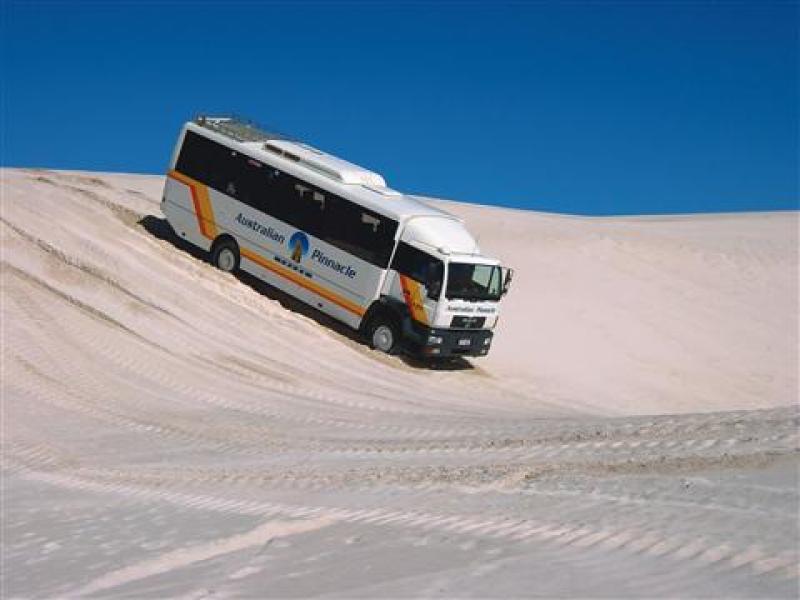 Pinnacle Tours: 1 day 4WD Pinnacles, Koalas & Sand Boarding